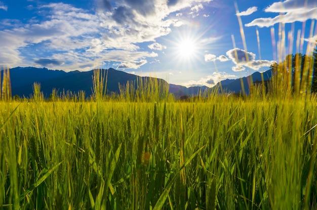 Sol brilhando sobre um lindo campo verde com grama alta e montanhas no horizonte