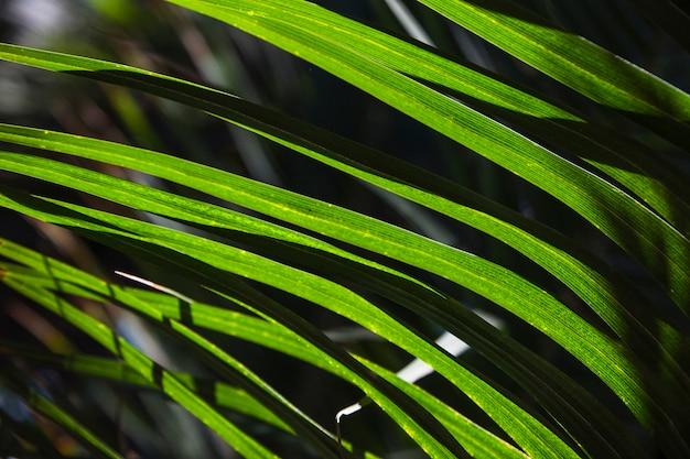 Sol de lâminas de grama tropical