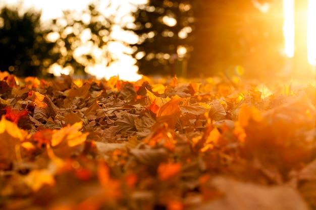 Sol de outono brilha através da folhagem