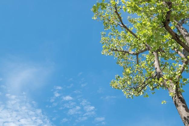 Sol que brilha através da árvore com céu azul.
