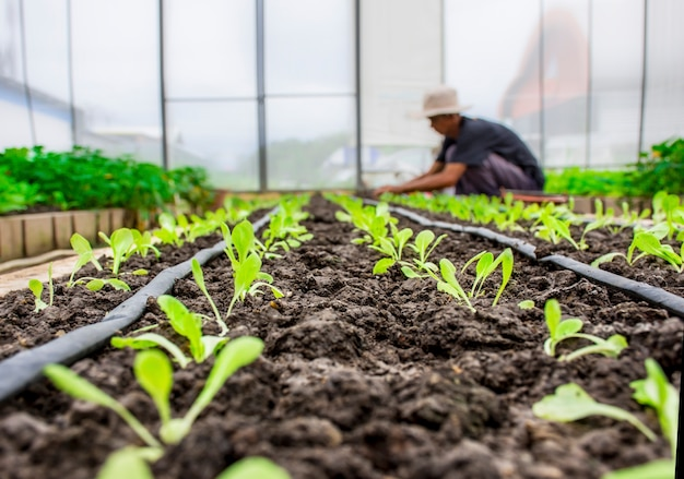 Solo de abundância orgânico vegetal com planta no jardim