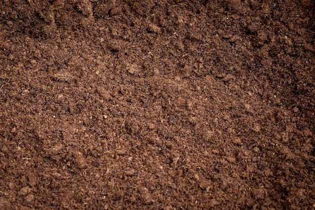 Solo de musgo de turfa