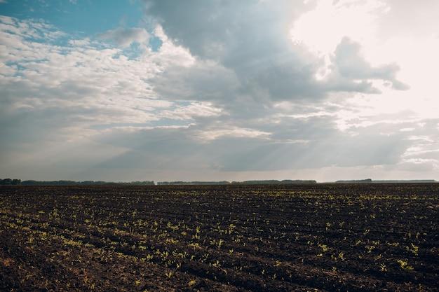 Solo de um campo agrícola preto terra arada pronta para a semeadura e céu nublado de primavera