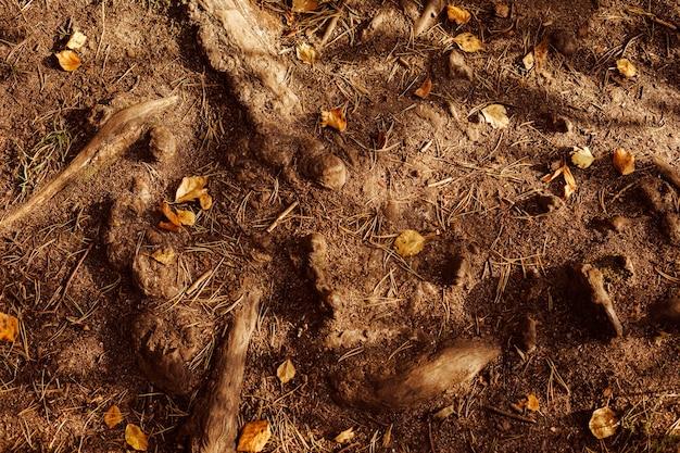 Solo marrom com raízes de árvores e folhas de outono amarelas, plano de fundo da natureza.