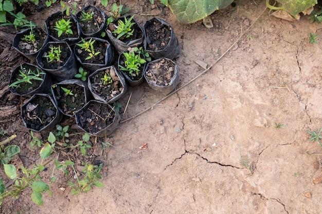 Solo seco marrom ou textura do solo rachado com viveiro de flores e plástico