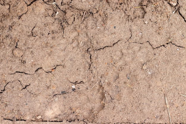 Solo úmido molhado com rachaduras e galhos secos