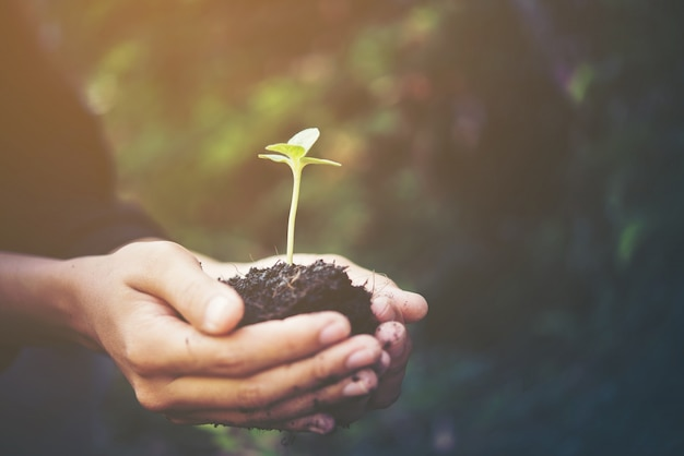 Solo verde agricultura pequeno fundo