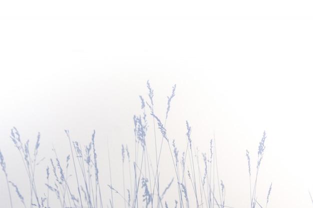 Sombra cinza abstrata de folhas naturais