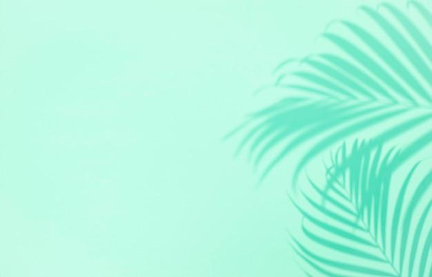 Sombra da folha de palmeira tropical sobre fundo verde, copyspace. conceito mínimo de verão