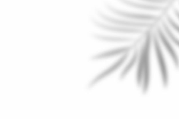 Sombra da folha de sobreposição no fundo branco da textura. use para apresentação de produtos decorativos.