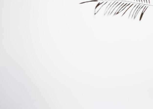 Sombra da folha isolada no fundo branco com espaço para escrever o texto