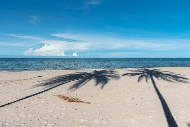 Sombra da palmeira de coco na praia.