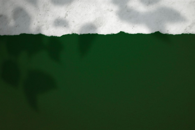 Sombra da planta em um fundo verde