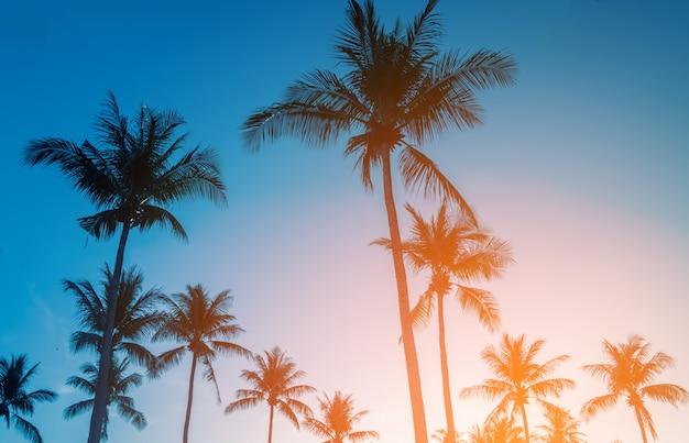 Sombra de coqueiro na praia