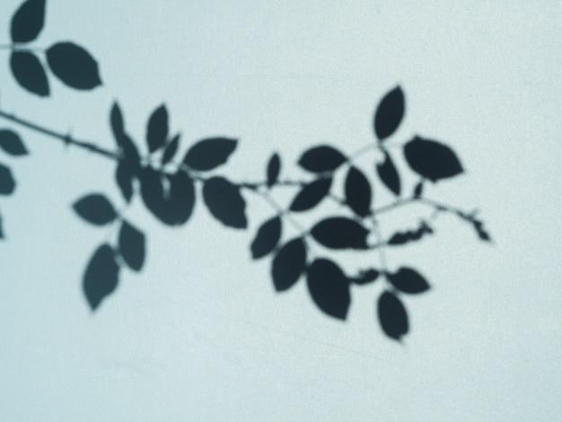 Sombra de folha de árvore sobre um fundo azul claro