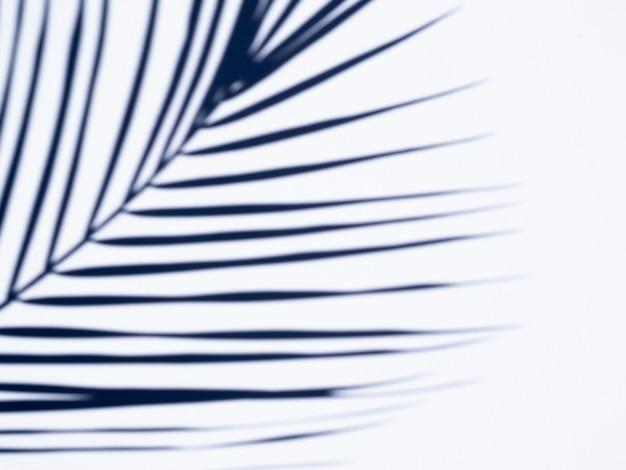 Sombra de folha de ficus em um fundo branco