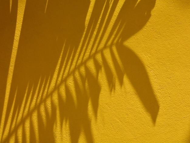 Sombra de folha de palmeira na parede amarela