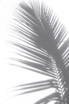 Sombra de folha tropical na superfície da parede