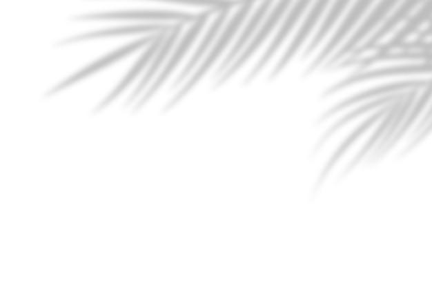 Sombra de folhas de palmeira em um fundo de parede branca. fundo branco, papelão. imagem abstrata. conceito tropical