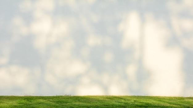 Sombra de galho de árvore na parede de cimento branco com grama verde