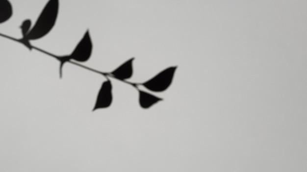 Sombra de galho de folha em um fundo cinza