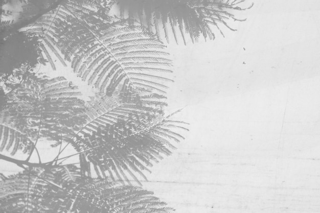 Sombra de galhos e folhas em uma parede branca