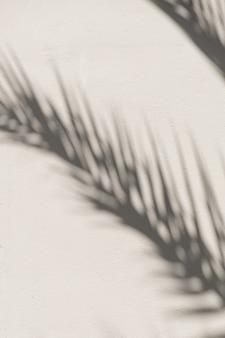 Sombra de luz solar de folha de palmeira tropical na parede.
