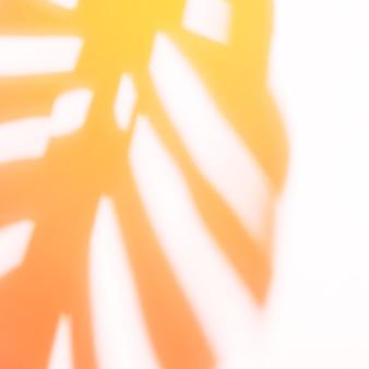 Sombra de monstera vermelha e laranja em fundo branco