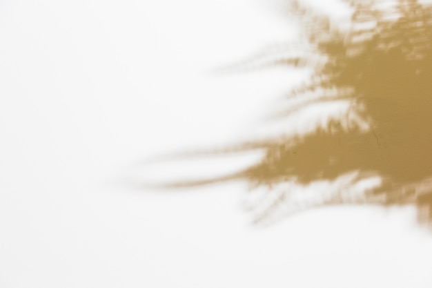 Sombra de samambaia turva deixa no pano de fundo branco