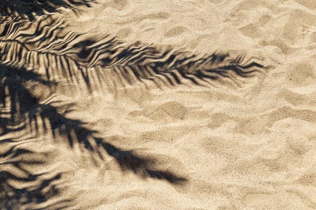 Sombra de uma folha de palmeira na areia em um dia ensolarado e quente.
