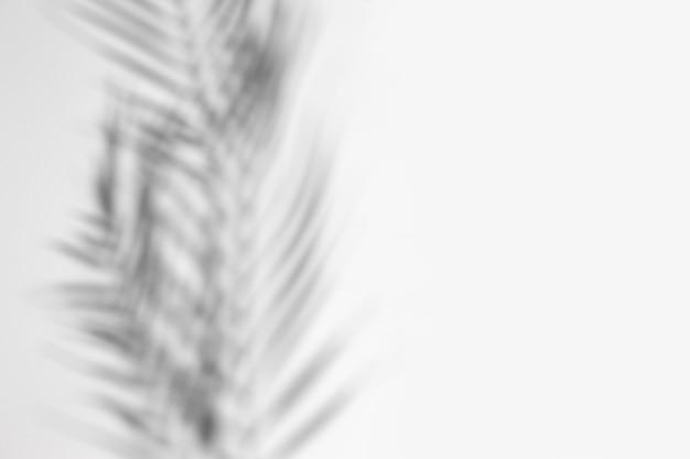 Sombra de uma folha de uma palmeira