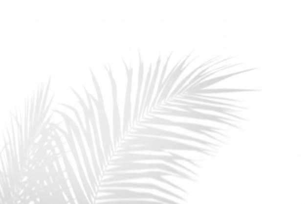 Sombra em folha de palmeira branca do preto abstrato da sombra em um fundo branco da parede.