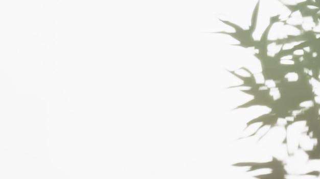 Sombra escura de folhas no pano de fundo branco