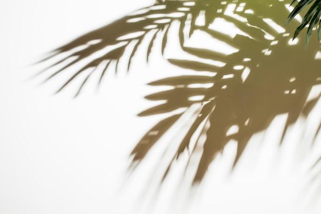 Sombra preta natural das folhas no fundo