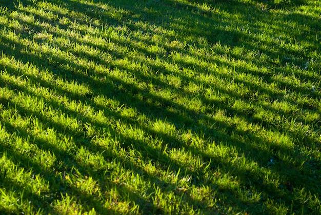 Sombras bonitas na grama do jardim em casa. luz do sol.