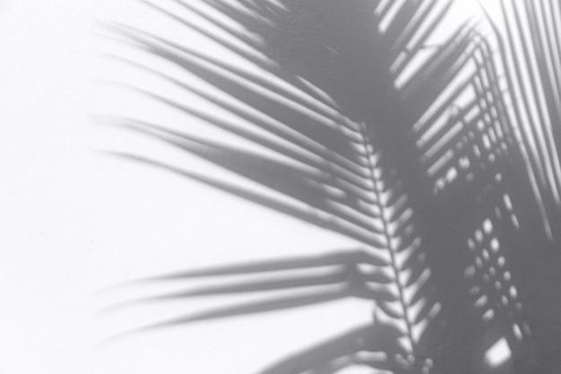 Sombras de folhas tropicais na superfície da parede