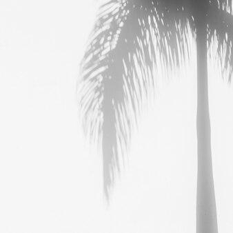 Sombras de palmeiras tropicais na parede de fundo branco