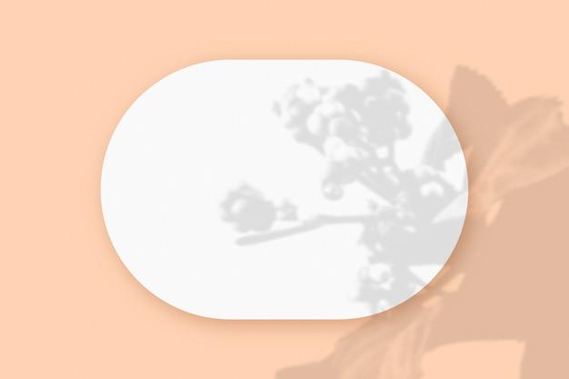 Sombras de plantas sobrepostas em uma folha oval de papel branco texturizado em um fundo de mesa rosa