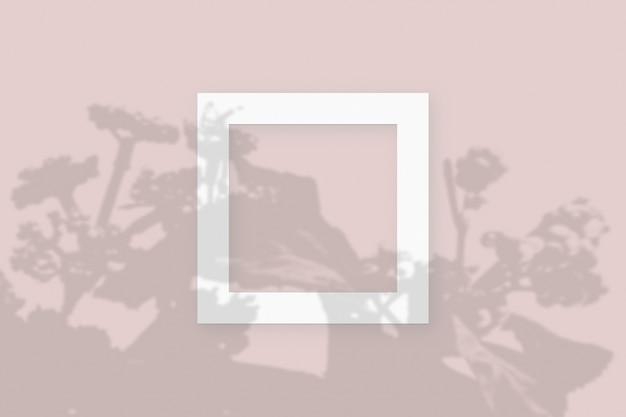 Sombras vegetais sobrepostas em 2 molduras quadradas de papel branco texturizado em um fundo de mesa rosa