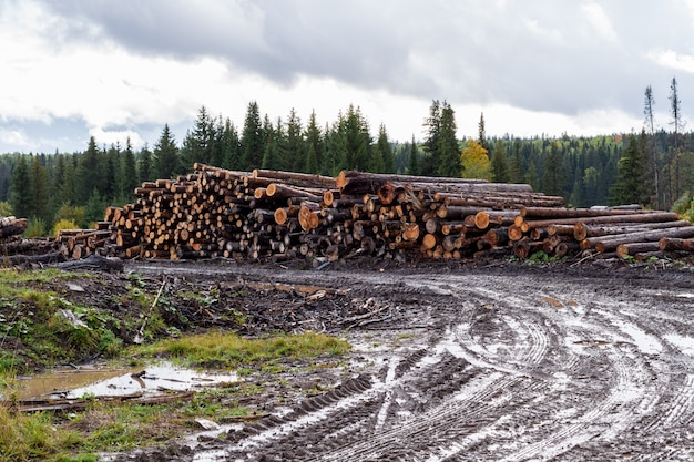 Sombria paisagem de outono. estrada de terra molhada, armazém de árvores abatidas e floresta.