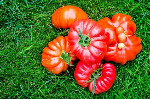 Somente tomates rasgados do bife na grama verde.