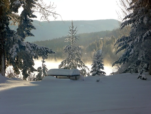 Sonho canim canadá lake inverno british columbia