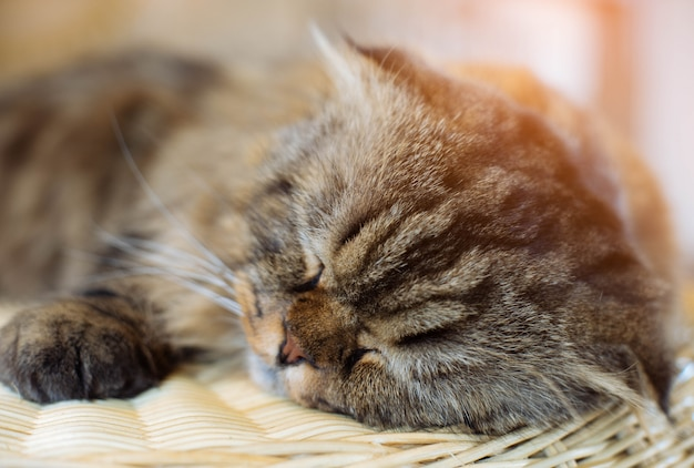 Sono bonito do gato no foco de madeira.