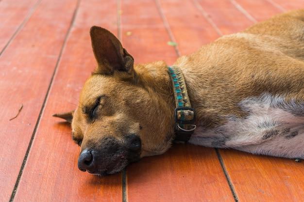 Sono de cachorro tailandês sem abrigo tailandês no chão