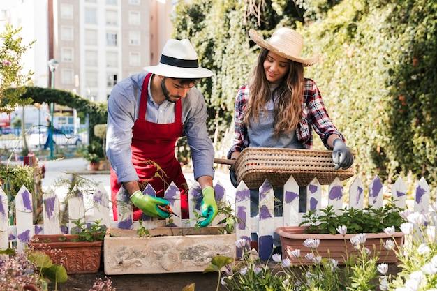 Sorrindo, jovem, femininas, jardineiro, segurando, cesta, olhar, seu, namorado, aparando, a, planta, com, secateurs
