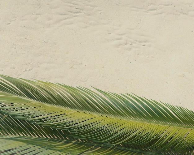 Sortimento de folhas de palmeira verdes 3d