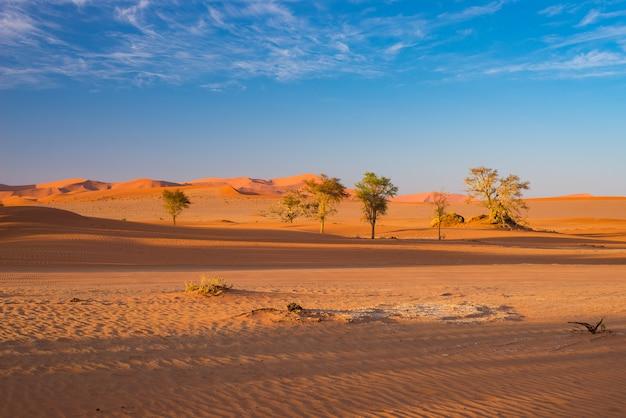 Sossusvlei namíbia, destino de viagem na áfrica. dunas de areia e panela de sal de argila com acácias.