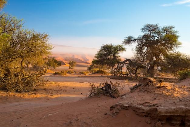 Sossusvlei namíbia, sal de argila cênica plana com acácias trançadas e majestosas dunas de areia.
