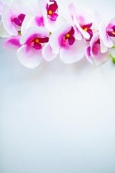 Spa e bem-estar cena. flor da orquídea no fundo pastel de madeira com copyspace