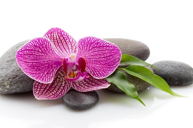 Spa masage pedras e orquídea isoladas